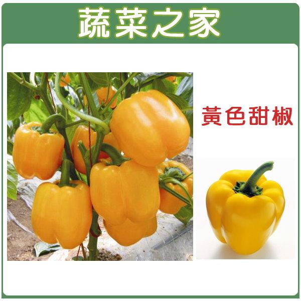 【蔬菜之家】G24.黃色甜椒 (金華星)種子1顆