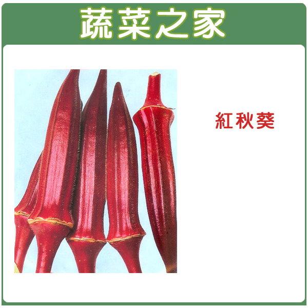 【蔬菜之家】大包裝G35.紅秋葵種子500顆
