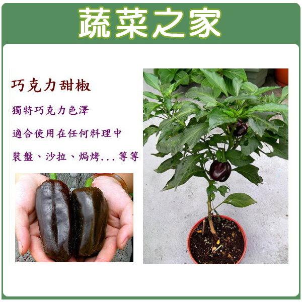 【蔬菜之家】G42.巧克力甜椒種子5顆