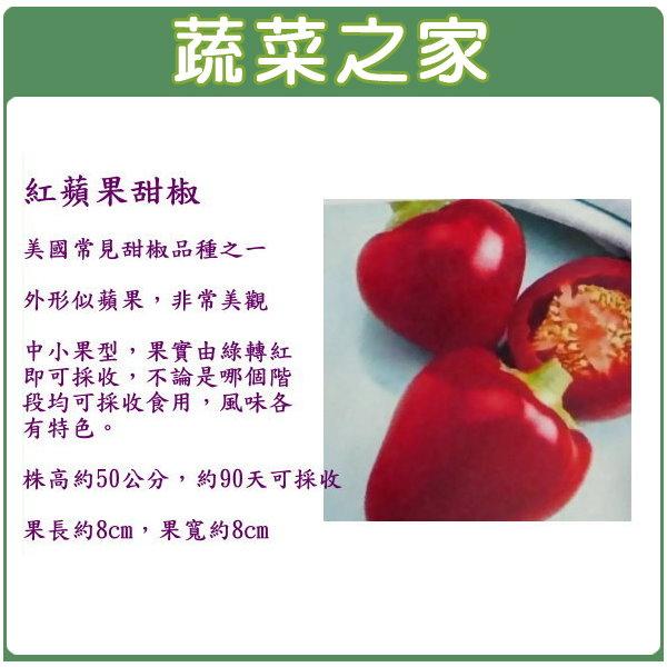 【蔬菜之家】G44.紅蘋果甜椒種子15顆(美國進口)