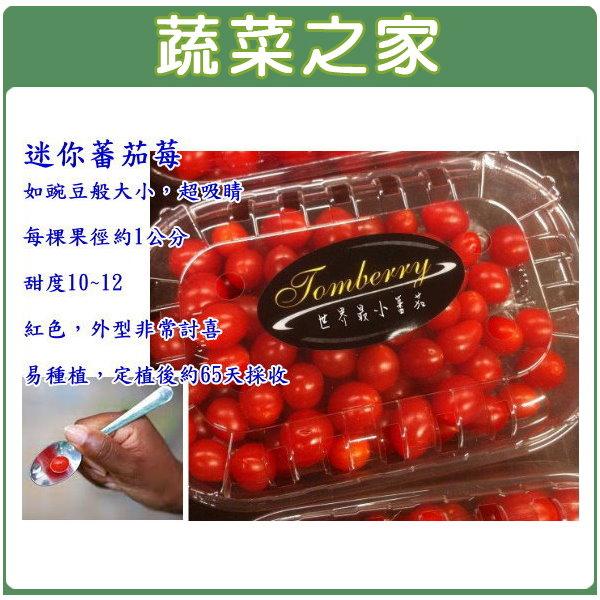 【蔬菜之家】G54.迷你蕃茄莓種子10顆