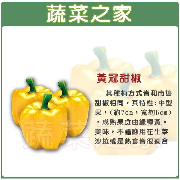 【蔬菜之家】G78.黃冠甜椒種子