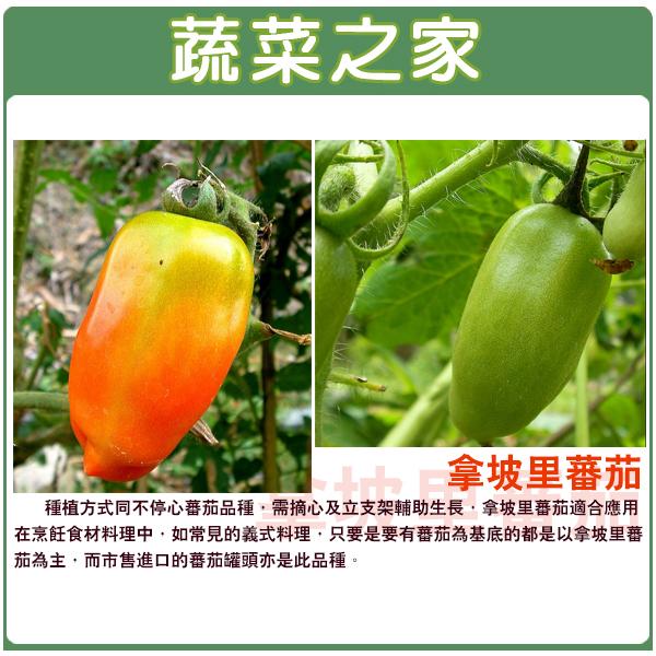 【蔬菜之家】G96.拿坡里蕃茄種子5顆