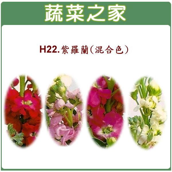 【蔬菜之家】H22.紫羅蘭(混合色,高40~60cm)種子35顆