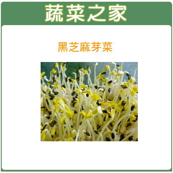 【蔬菜之家】 J14.黑芝麻芽(芽菜種子)種子4500顆