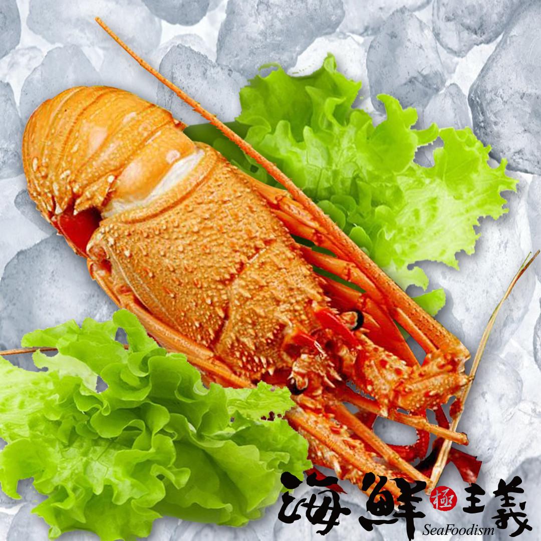 【海鮮主義】熟凍龍蝦550G±20 ●來自古巴 ●生長在純淨海域,經捕撈後急速冷凍,鎖住自然鮮甜 ●肉質緊實錦密,十分Q彈 ●可做蒸、煮、焗烤、奶油