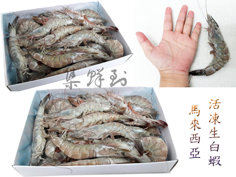 馬來西亞活凍生白蝦 21/30 700g±10% / 盒