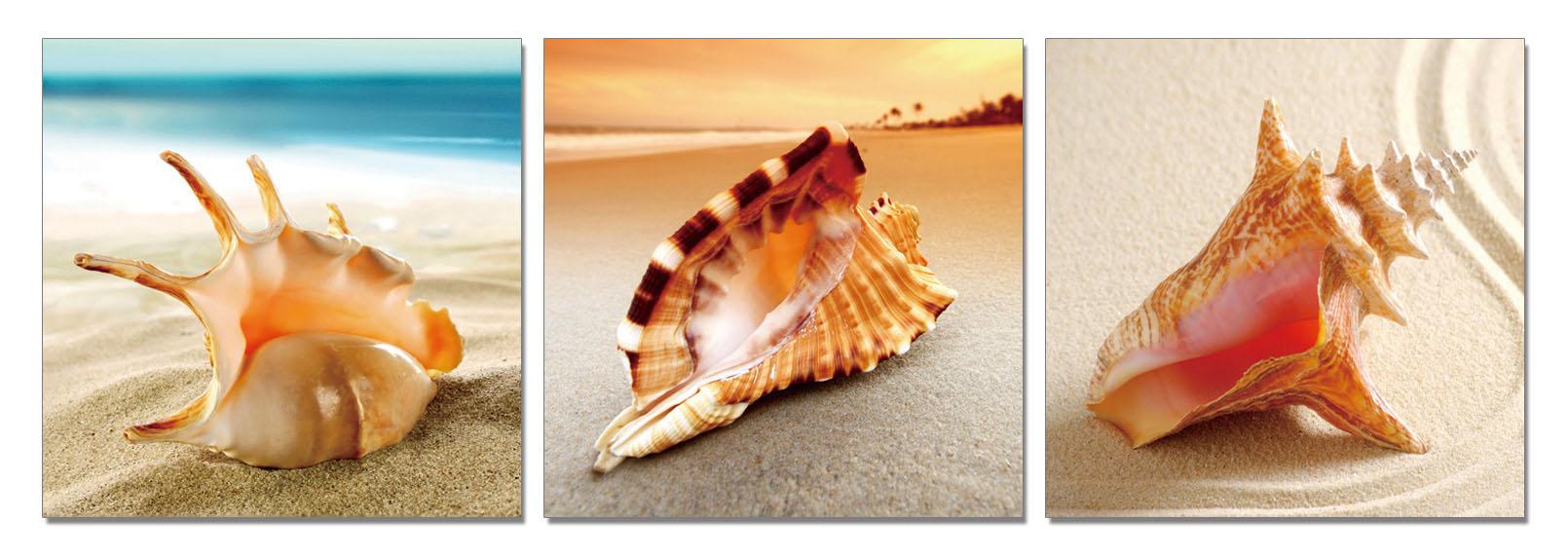 聚鯨Cetacea﹡Art【貝殼TC-25610ABC印製畫】貝殼砂 無框畫 裝飾畫 居家裝飾 商業空間