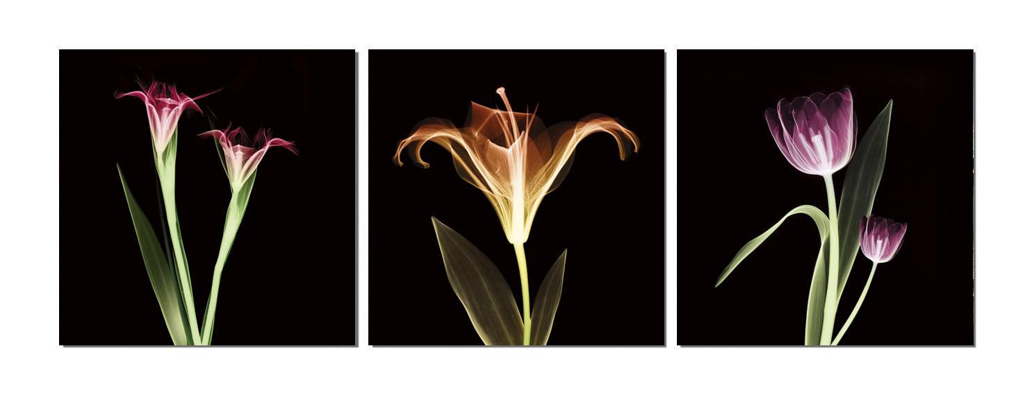 聚鯨Cetacea﹡Art【花TD-0990+91+92印製畫】無框畫 裝飾畫 居家裝飾 商業空間